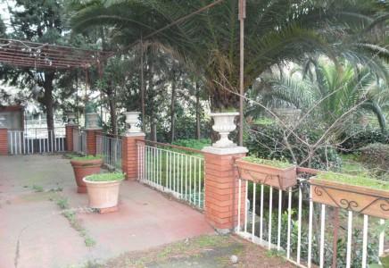 Image for Nicolosi